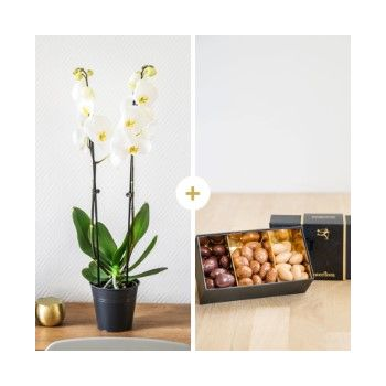 Tarbes flowers  -  White luck Flower Delivery