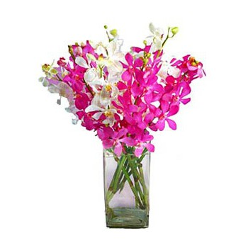 Mijas / Mijas Costa flowers  -  Splendid Orchids Flower Bouquet/Arrangement