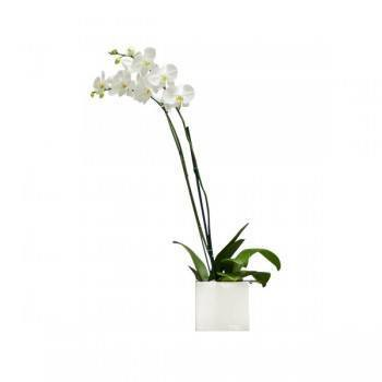 Spain flowers  -  White Elegance Flower Delivery
