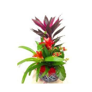 Beirut flowers  -  Tropical Garden Flower Bouquet/Arrangement