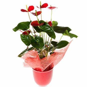 Casablanca flowers  -  Stylish Flower Bouquet/Arrangement