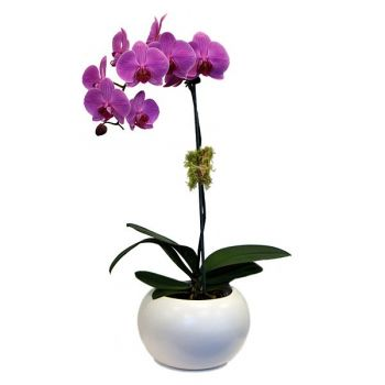 Dhour Chweir flowers  -  Pure Purple Flower Delivery