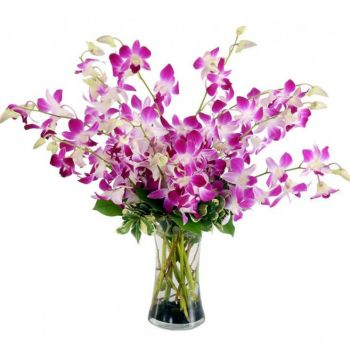 Crotone flowers  -  Devine Choice Flower Delivery