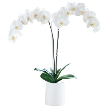 Croatia flowers  -  White Elegance Flower Delivery
