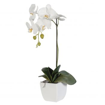 Poti flowers  -  White Elegance Flower Delivery