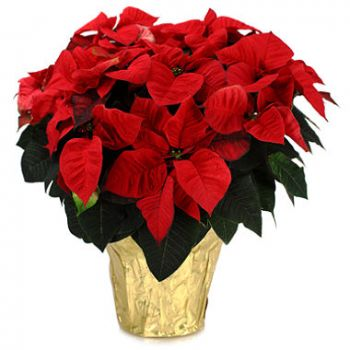 Bursa flowers  -  Festive Delight Flower Delivery