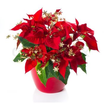Elda flowers  -  Festive Sparkle Flower Delivery