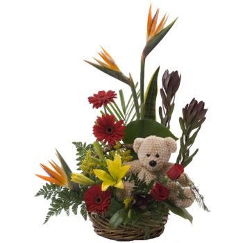 Barbados online Florist - Tropical Bear Basket Bouquet