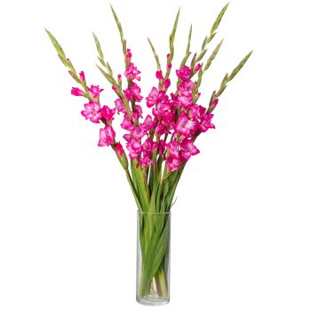 San Miguel flowers  -  Pink Summer Love Flower Delivery