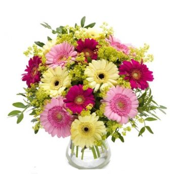 Gerona flowers  -  Spring Delight Flower Delivery