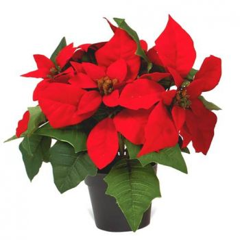 France online Florist - Festive Regards Bouquet