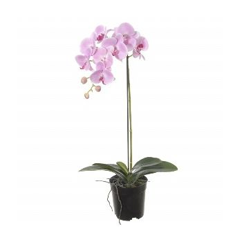 Japan blomster- Fancy Pink Orchid Blomst Levering