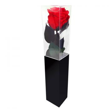 Cala Llonga flowers  -  Eternal Rose 35 cm Flower Delivery