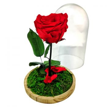 fleuriste fleurs de Valladolid- Eternal Rose Dome Bouquet/Arrangement floral