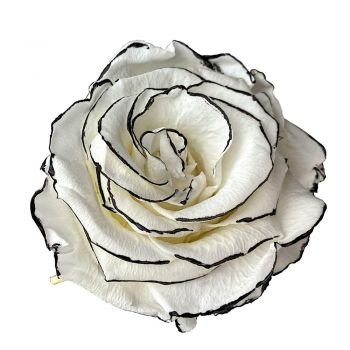 Salt flowers  -  An eternal rosebud   Flower Delivery