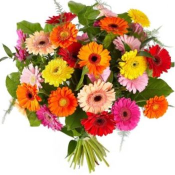 Aalsmeer flowers  -  Colourful gerbera Flower Delivery