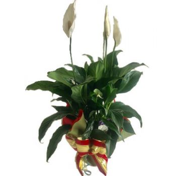 Southport flowers  -  Peace Lily Flower Delivery