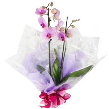 Gold Coast flowers  -  Teresa Flower Delivery